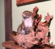 Buck Ridge Cabin Squirrel